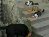 The most hilarious scenes with animals